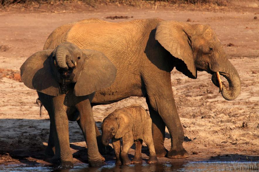 Safari Groepsreis Lodges - 19 DAGEN KAAPSTAD, NAMIBIË, BOTSWANA & VICTORIA FALLS 94