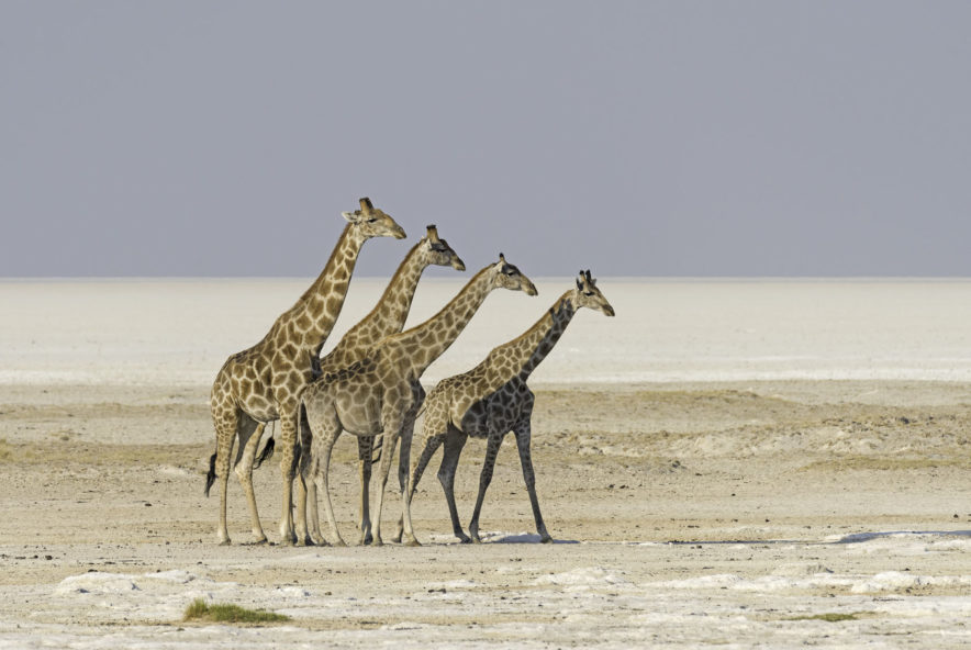 Safari Groepsreis Lodges - 12 DAGEN KAAPSTAD, NAMIB WOESTIJN, ETOSHA & WINDHOEK (NAMIBIË) 73
