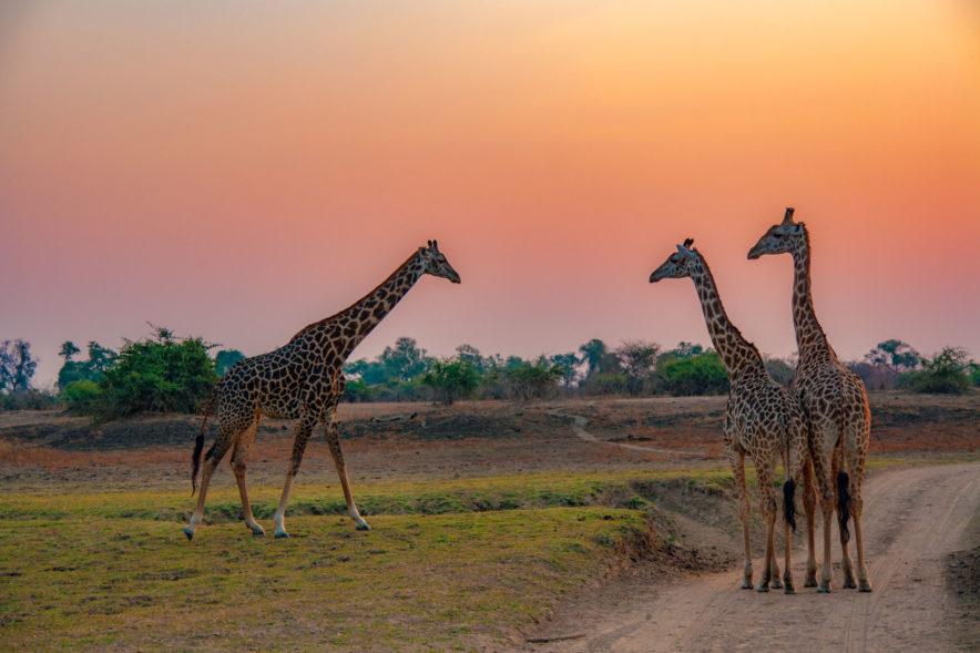 Safari Groepsreis Lodges - 19 DAGEN KAAPSTAD, NAMIBIË, BOTSWANA & VICTORIA FALLS 99