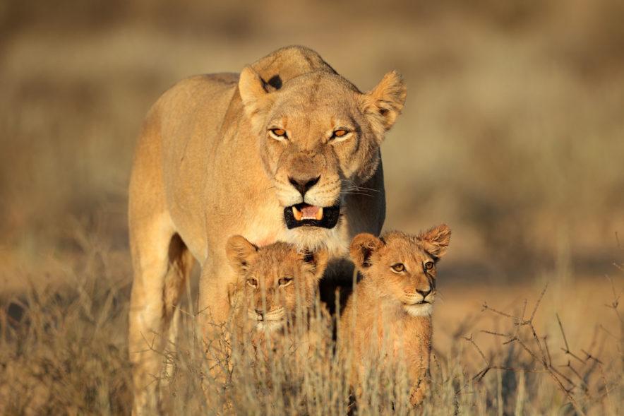 Safari Groepsreis Lodges - 12 DAGEN KAAPSTAD, NAMIB WOESTIJN, ETOSHA & WINDHOEK (NAMIBIË) 80