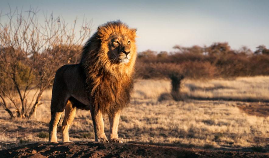 Safari Groepsreis Lodges - 19 DAGEN KAAPSTAD, NAMIBIË, BOTSWANA & VICTORIA FALLS 106