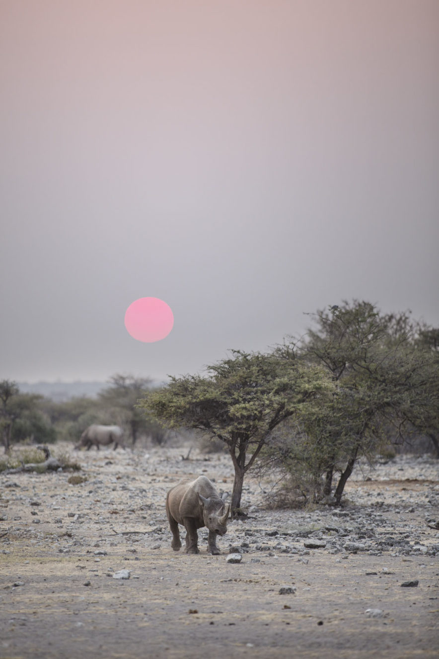 Safari Groepsreis Lodges - 12 DAGEN KAAPSTAD, NAMIB WOESTIJN, ETOSHA & WINDHOEK (NAMIBIË) 84