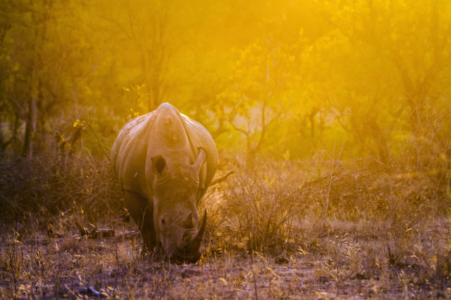 Safari Groepsreis Lodges - 19 DAGEN KAAPSTAD, NAMIBIË, BOTSWANA & VICTORIA FALLS 109