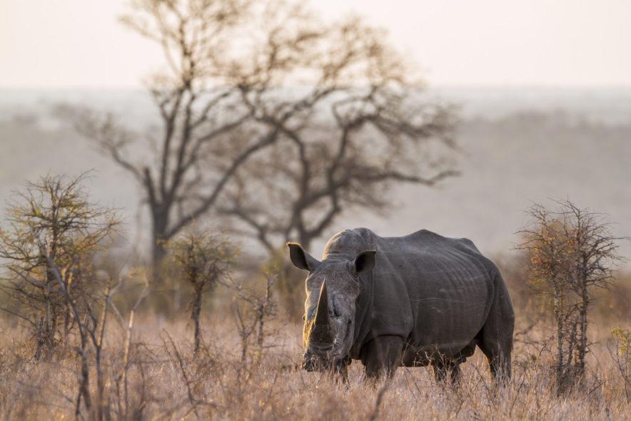 Safari Groepsreis Lodges - 19 DAGEN KAAPSTAD, NAMIBIË, BOTSWANA & VICTORIA FALLS 110