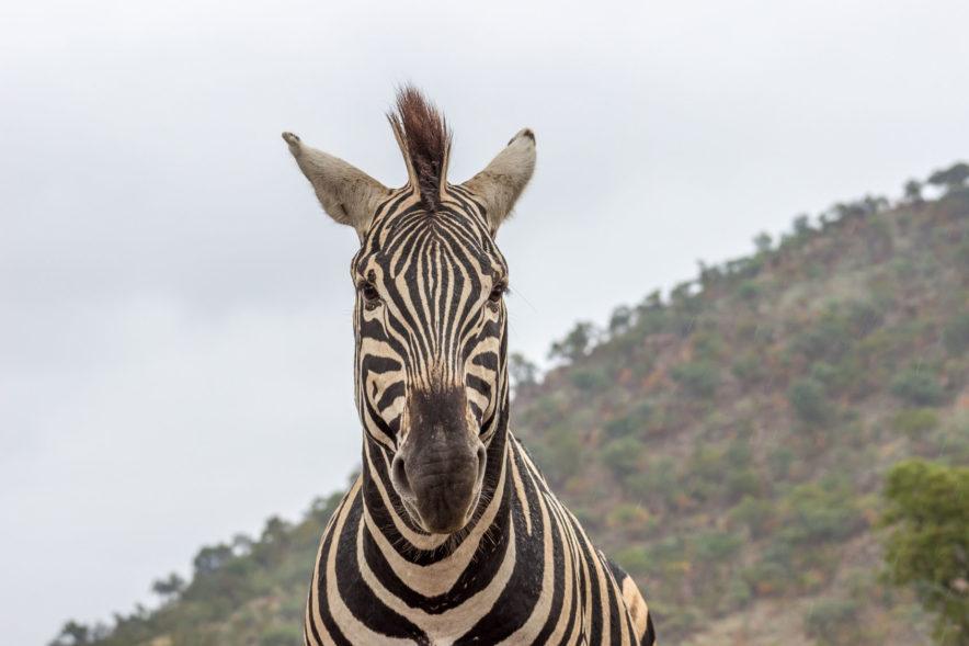 Safari Groepsreis Lodges - 19 DAGEN KAAPSTAD, NAMIBIË, BOTSWANA & VICTORIA FALLS 114