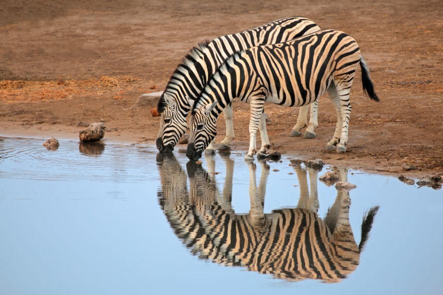 Safari Groepsreis Lodges - 19 DAGEN KAAPSTAD, NAMIBIË, BOTSWANA & VICTORIA FALLS 115