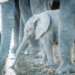 Safari Groepsreis Lodges - 19 DAGEN KAAPSTAD, NAMIBIË, BOTSWANA & VICTORIA FALLS 41