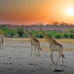Safari Groepsreis Lodges - 19 DAGEN KAAPSTAD, NAMIBIË, BOTSWANA & VICTORIA FALLS 42