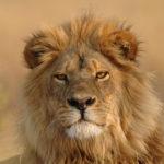 Safari Groepsreis Lodges - 19 DAGEN KAAPSTAD, NAMIBIË, BOTSWANA & VICTORIA FALLS 43