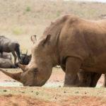 Safari Groepsreis Lodges - 12 DAGEN KAAPSTAD, NAMIB WOESTIJN, ETOSHA & WINDHOEK (NAMIBIË) 44