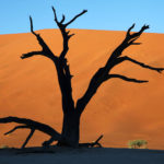 Safari Groepsreis Lodges - 19 DAGEN KAAPSTAD, NAMIBIË, BOTSWANA & VICTORIA FALLS 22