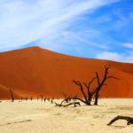 Safari Groepsreis Lodges - 19 DAGEN KAAPSTAD, NAMIBIË, BOTSWANA & VICTORIA FALLS 24
