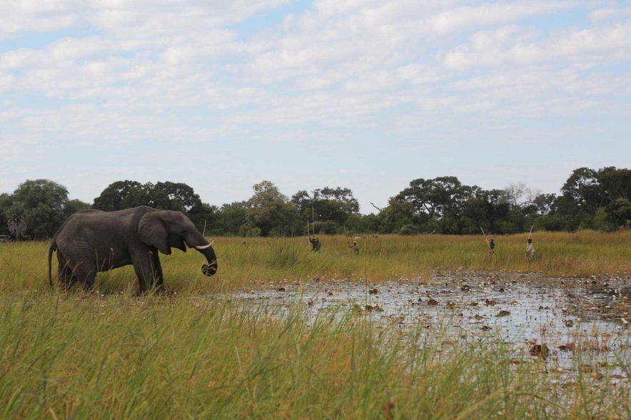 Safari Groepsreis Lodges 8 dagen botswana okavango delta en victoria falls avontuurlijk 100