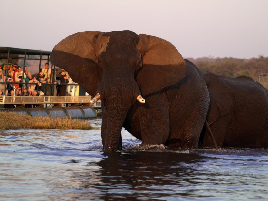 Safari Groepsreis Lodges 8 dagen botswana okavango delta en victoria falls avontuurlijk 44