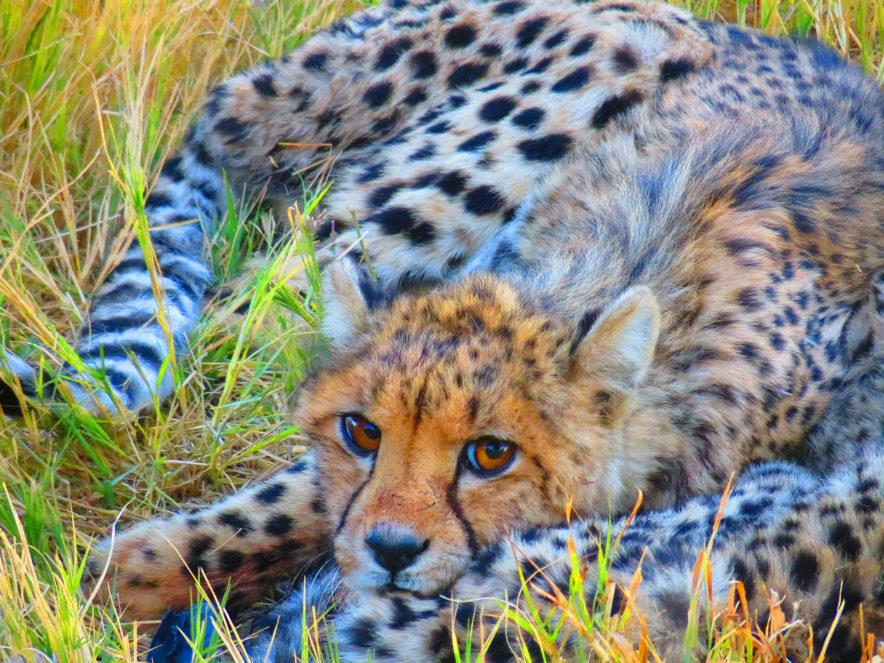Safari Groepsreis Lodges - 19 DAGEN KAAPSTAD, NAMIBIË, BOTSWANA & VICTORIA FALLS 200