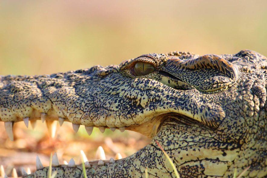 Safari Groepsreis Lodges 8 dagen botswana okavango delta en victoria falls avontuurlijk 95