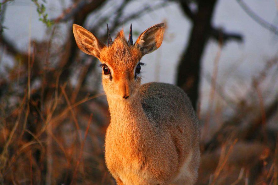 Safari Groepsreis Lodges - 19 DAGEN KAAPSTAD, NAMIBIË, BOTSWANA & VICTORIA FALLS 198