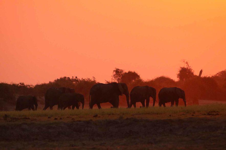 Safari Groepsreis Lodges 8 dagen botswana okavango delta en victoria falls avontuurlijk 91