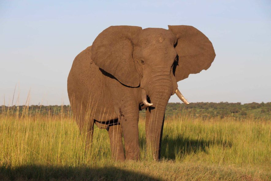 Safari Groepsreis Lodges 8 dagen botswana okavango delta en victoria falls avontuurlijk 60