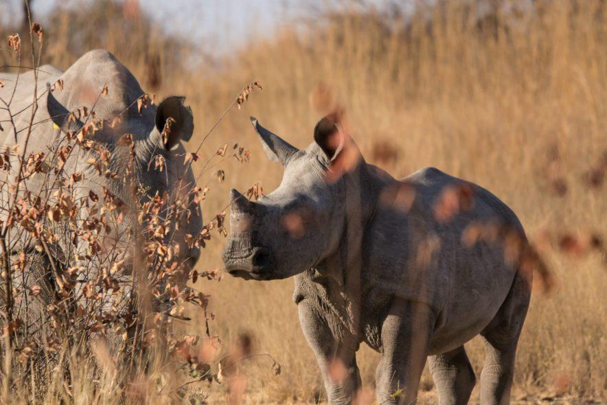 Safari Groepsreis Camping - 25 DAGEN KAAPSTAD, NAMIBIË, ETOSHA, BOTSWANA, OKAVANGO DELTA, VICTORIA FALLS & JOHANNESBURG 92