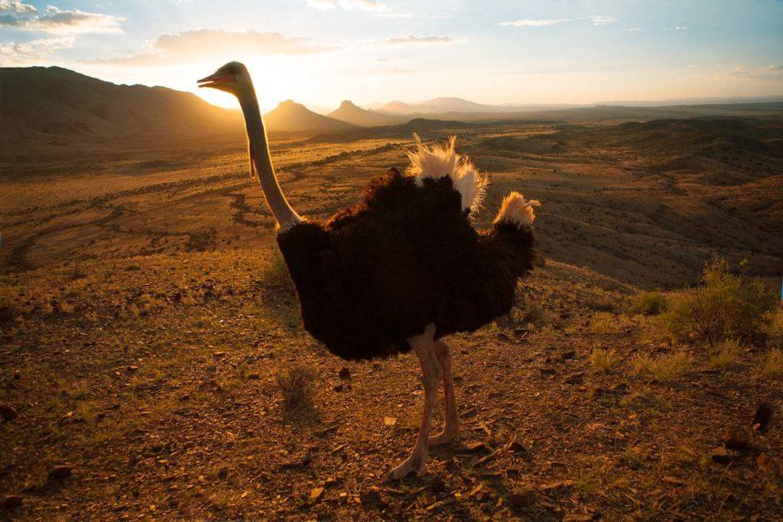 Safari Groepsreis Lodges - 13 DAGEN HET BESTE VAN ZUID-AFRIKA 133