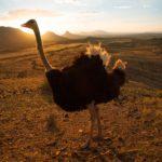 Safari Groepsreis Lodges - 13 DAGEN HET BESTE VAN ZUID-AFRIKA 41