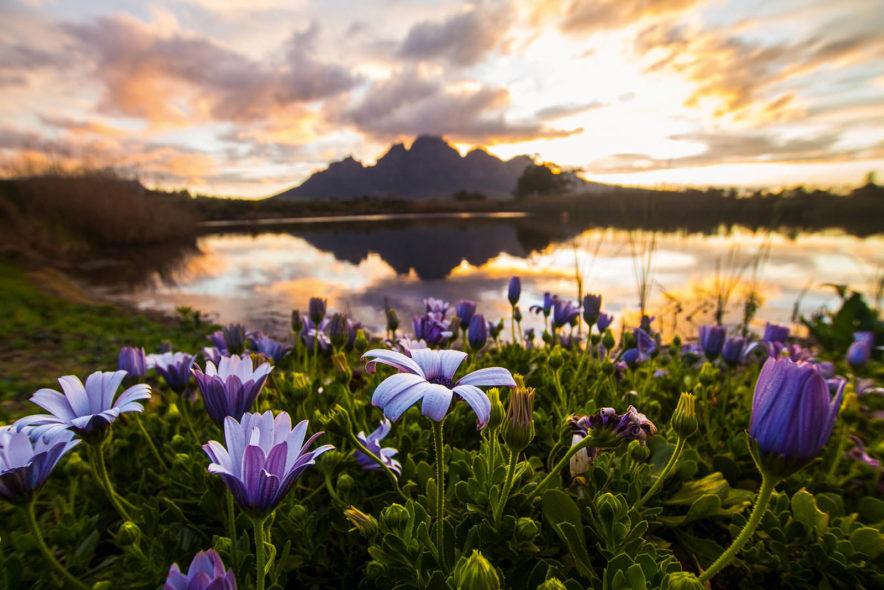 Safari Groepsreis Lodges - 13 DAGEN HET BESTE VAN ZUID-AFRIKA 136