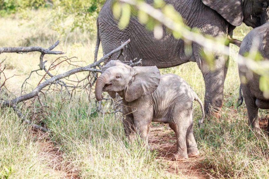 Safari Groepsreis Lodges - 8 DAGEN Kaapstad Tuinroute Tsitsikamma NP Addo Elephant NP 31