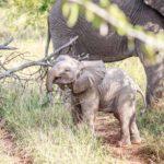 Safari Groepsreis Lodges - 8 DAGEN Kaapstad Tuinroute Tsitsikamma NP Addo Elephant NP 5