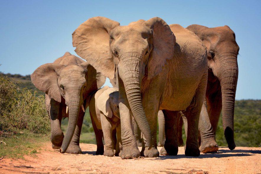 Safari Groepsreis Lodges - 8 DAGEN Kaapstad Tuinroute Tsitsikamma NP Addo Elephant NP 49