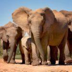 Safari Groepsreis Lodges - 8 DAGEN Kaapstad Tuinroute Tsitsikamma NP Addo Elephant NP 17