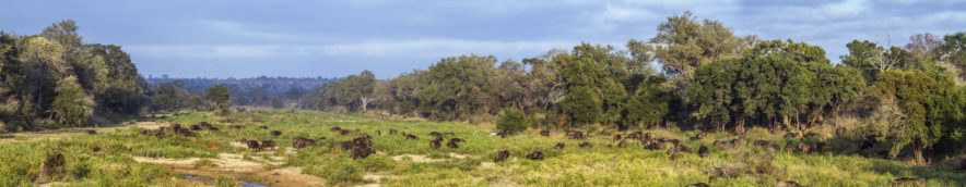 Safari Groepsreis Lodges 20 dagen Zuid-Afrika  Kruger park Swaziland, KwaZulu-Natal Tuinroute Lesotho en Kaapstad 81