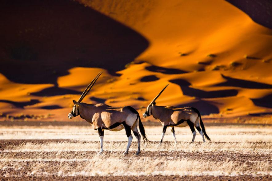 Safari Groepsreis Camping - 25 DAGEN KAAPSTAD, NAMIBIË, ETOSHA, BOTSWANA, OKAVANGO DELTA, VICTORIA FALLS & JOHANNESBURG 106