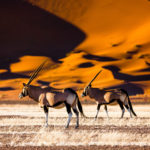 Safari Groepsreis Camping - 25 DAGEN KAAPSTAD, NAMIBIË, ETOSHA, BOTSWANA, OKAVANGO DELTA, VICTORIA FALLS & JOHANNESBURG 17