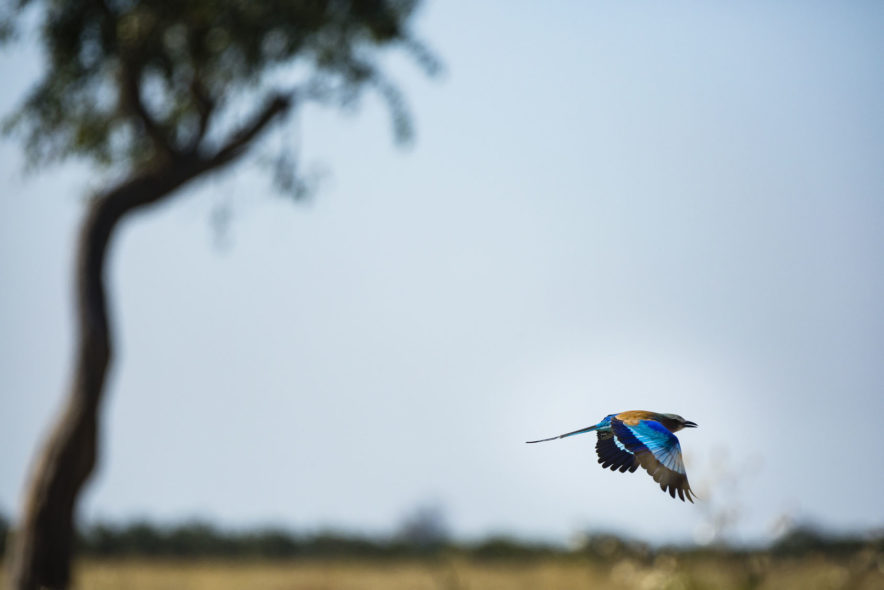 Safari Groepsreis Camping - 25 DAGEN KAAPSTAD, NAMIBIË, ETOSHA, BOTSWANA, OKAVANGO DELTA, VICTORIA FALLS & JOHANNESBURG 150
