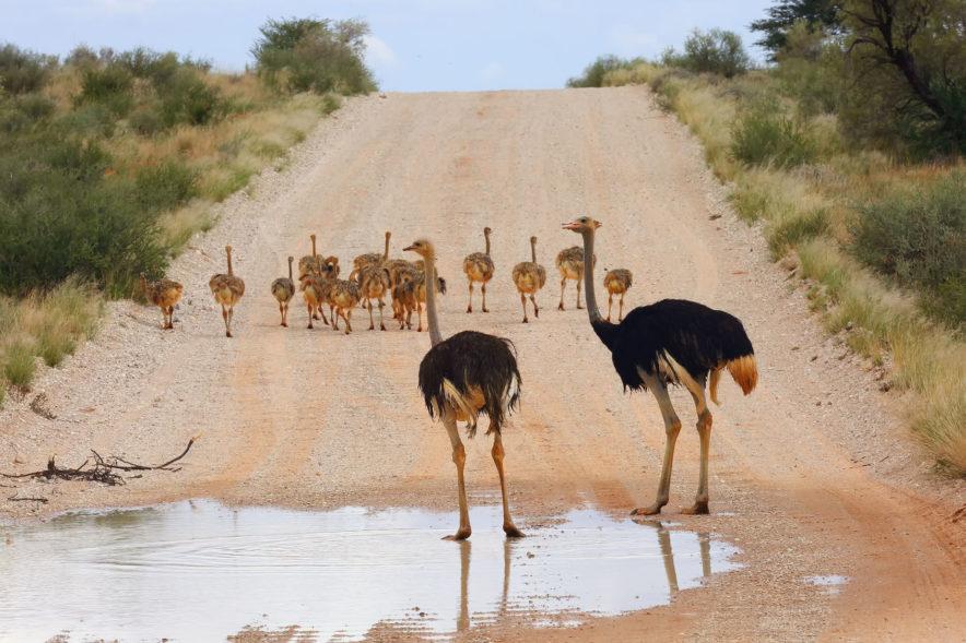 Safari Groepsreis Camping - 25 DAGEN KAAPSTAD, NAMIBIË, ETOSHA, BOTSWANA, OKAVANGO DELTA, VICTORIA FALLS & JOHANNESBURG 149