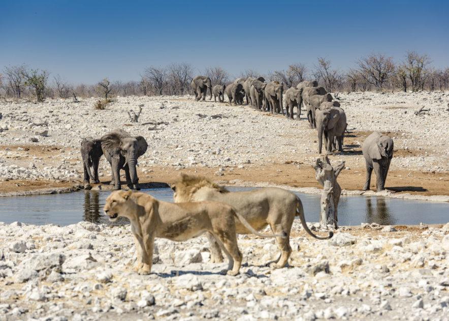 Safari Groepsreis Camping - 25 DAGEN KAAPSTAD, NAMIBIË, ETOSHA, BOTSWANA, OKAVANGO DELTA, VICTORIA FALLS & JOHANNESBURG 151