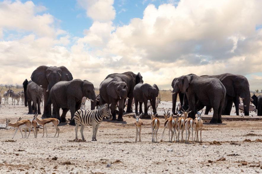 Safari Groepsreis Camping - 25 DAGEN KAAPSTAD, NAMIBIË, ETOSHA, BOTSWANA, OKAVANGO DELTA, VICTORIA FALLS & JOHANNESBURG 115