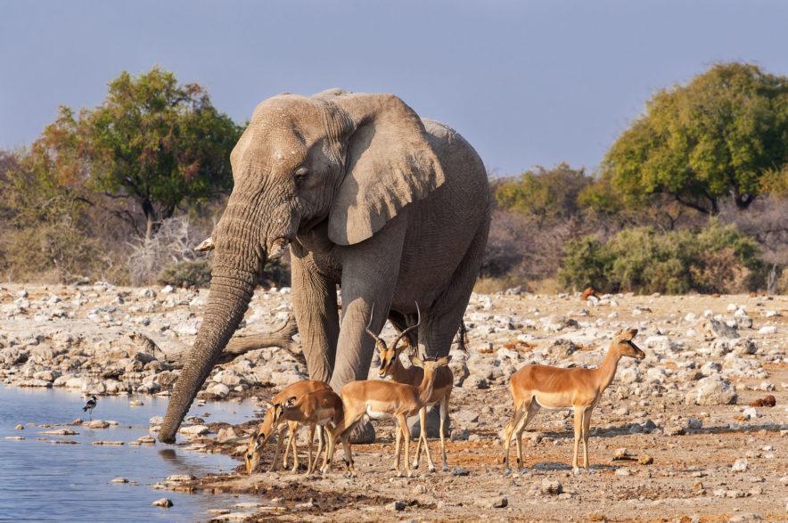 Safari Groepsreis Camping - 25 DAGEN KAAPSTAD, NAMIBIË, ETOSHA, BOTSWANA, OKAVANGO DELTA, VICTORIA FALLS & JOHANNESBURG 122
