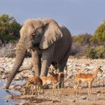 Safari Groepsreis Camping - 25 DAGEN KAAPSTAD, NAMIBIË, ETOSHA, BOTSWANA, OKAVANGO DELTA, VICTORIA FALLS & JOHANNESBURG 42