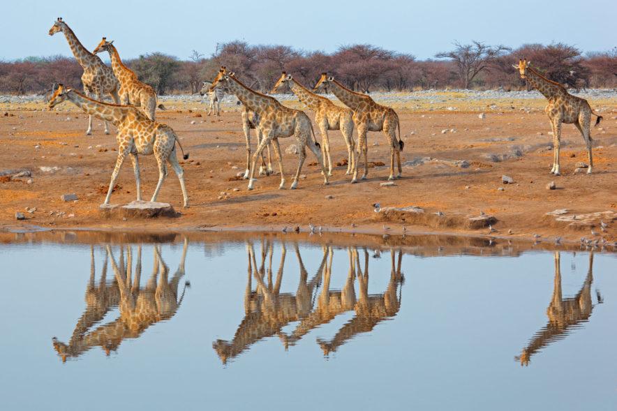 Safari Groepsreis Camping - 25 DAGEN KAAPSTAD, NAMIBIË, ETOSHA, BOTSWANA, OKAVANGO DELTA, VICTORIA FALLS & JOHANNESBURG 117