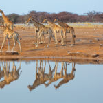 Safari Groepsreis Camping - 25 DAGEN KAAPSTAD, NAMIBIË, ETOSHA, BOTSWANA, OKAVANGO DELTA, VICTORIA FALLS & JOHANNESBURG 37