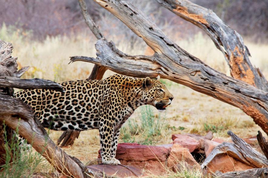 Safari Groepsreis Camping - 25 DAGEN KAAPSTAD, NAMIBIË, ETOSHA, BOTSWANA, OKAVANGO DELTA, VICTORIA FALLS & JOHANNESBURG 132