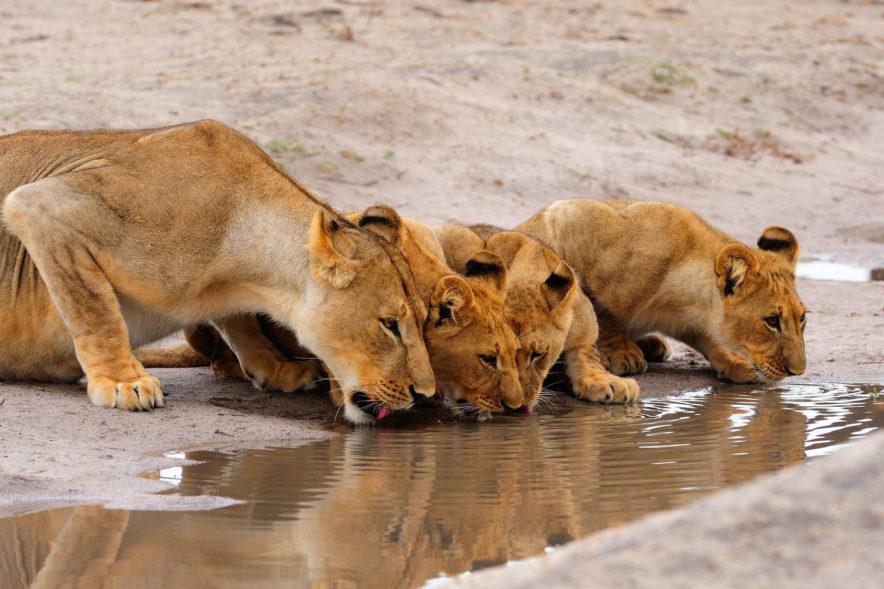 Safari Groepsreis Camping - 25 DAGEN KAAPSTAD, NAMIBIË, ETOSHA, BOTSWANA, OKAVANGO DELTA, VICTORIA FALLS & JOHANNESBURG 134