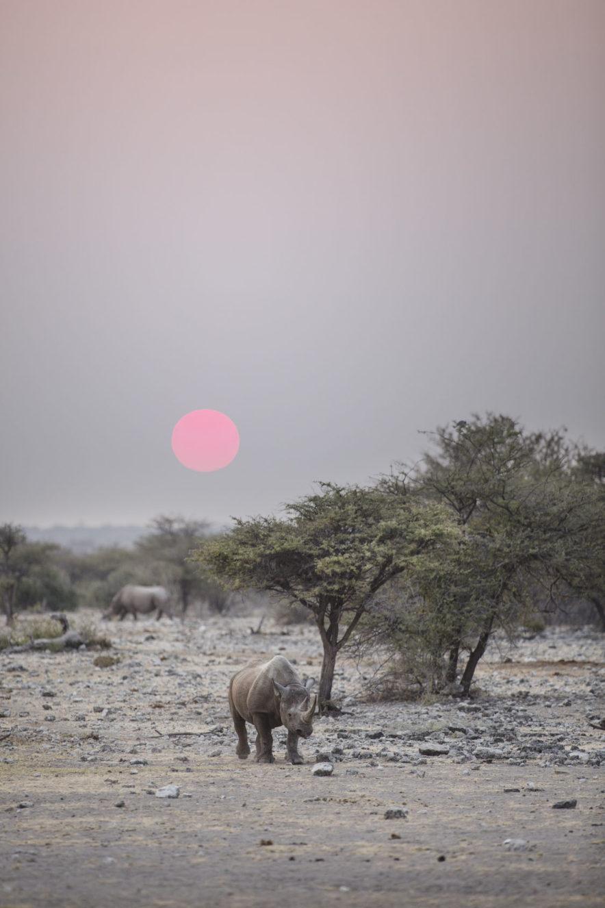 Safari Groepsreis Camping - 25 DAGEN KAAPSTAD, NAMIBIË, ETOSHA, BOTSWANA, OKAVANGO DELTA, VICTORIA FALLS & JOHANNESBURG 96