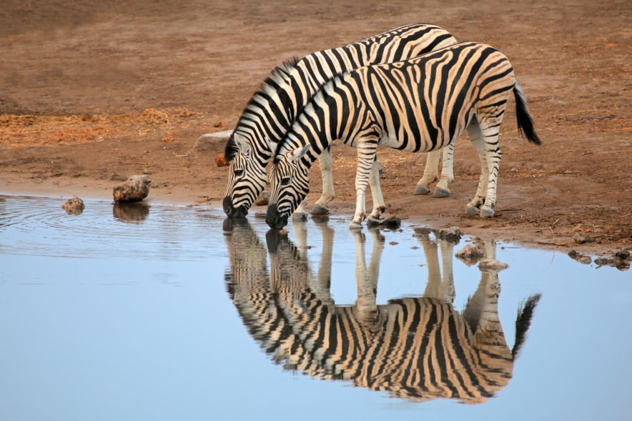 Safari Groepsreis Camping - 25 DAGEN KAAPSTAD, NAMIBIË, ETOSHA, BOTSWANA, OKAVANGO DELTA, VICTORIA FALLS & JOHANNESBURG 137