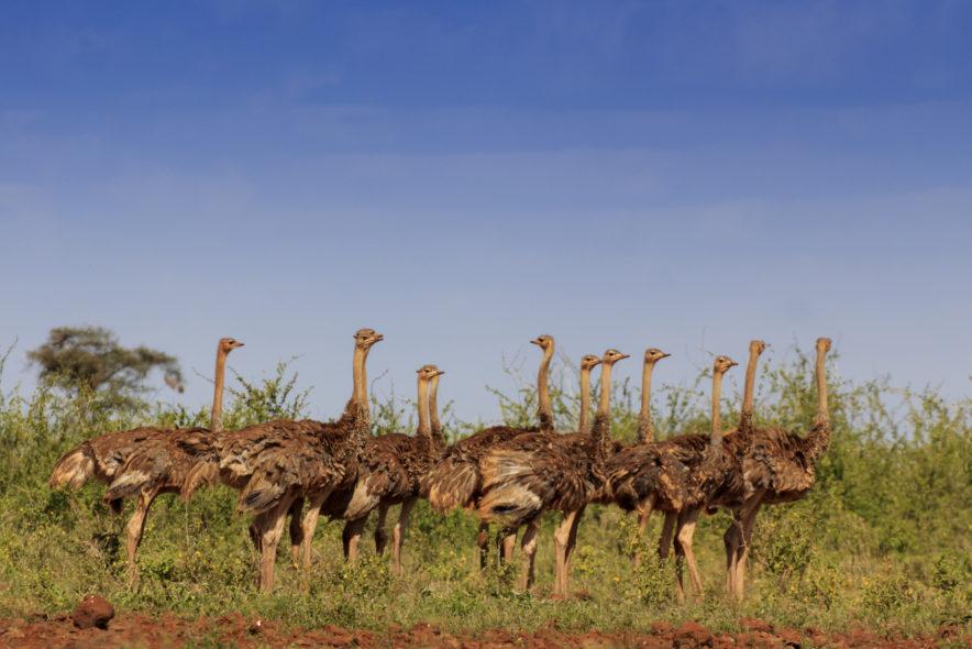 Safari Groepsreis Lodges 20 dagen Zuid-Afrika  Kruger park Swaziland, KwaZulu-Natal Tuinroute Lesotho en Kaapstad 135
