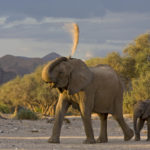 Safari Groepsreis Lodges - 20 DAGEN NAMIBIË, BOTSWANA & VICTORIA FALLS - Ontdekking 17