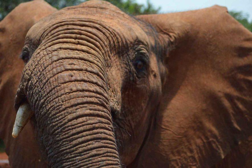 Safari Groepsreis Lodges - 13 DAGEN HET BESTE VAN ZUID-AFRIKA 56