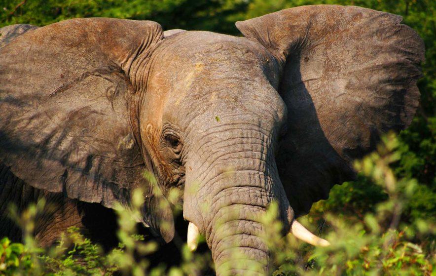Safari Groepsreis Lodges - 13 DAGEN HET BESTE VAN ZUID-AFRIKA 57